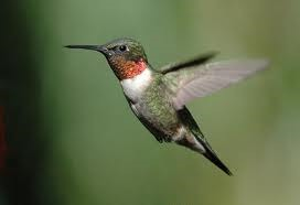 Yew Dell Botanical Gardens Hummingbird Festival August 24th