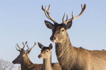 The Louisville Deer and Turkey Exposition Begins January 30
