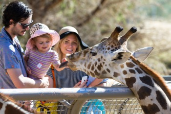 Sing Along with Frozen at the Louisville Zoo August 14