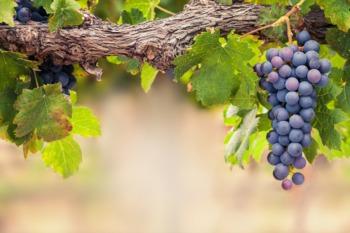 Have a Sip at Broad Run Vineyards This October