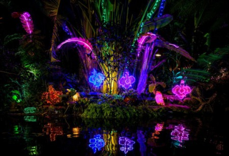 Lights in Bloom at Selby Gardens