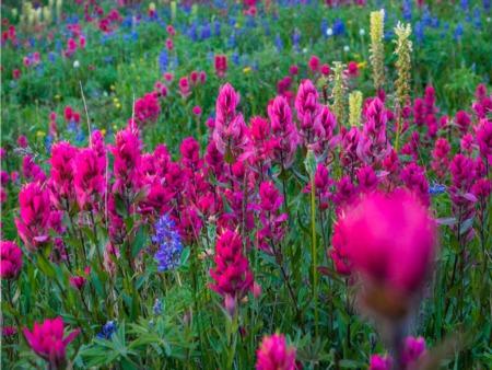 Southern Spring Gardening Tips