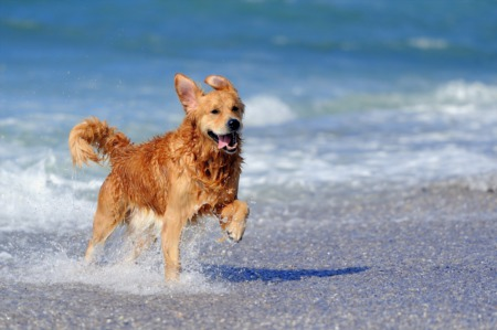 Pet-Friendly Travel & Leisure in Sarasota