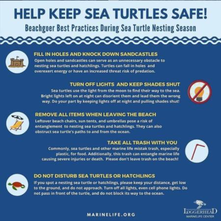 Sea Turtle Nesting Season Reminder