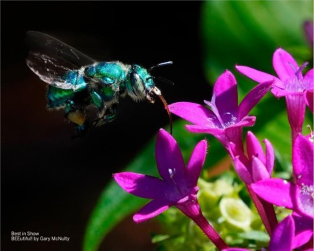 Selby Gardens Virtual 41st Annual Juried Photographic Exhibition
