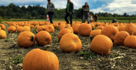Celebrate Spooky Season With These October Events