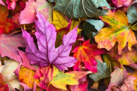 Fall in Autumn With These 4 Easy Decor Tips!