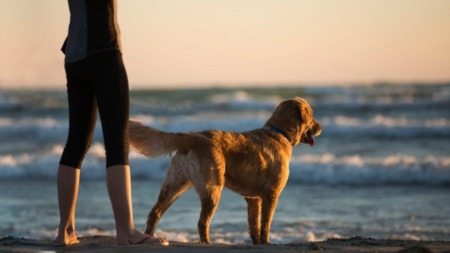 13 Things To Do With Your Pets This Summer