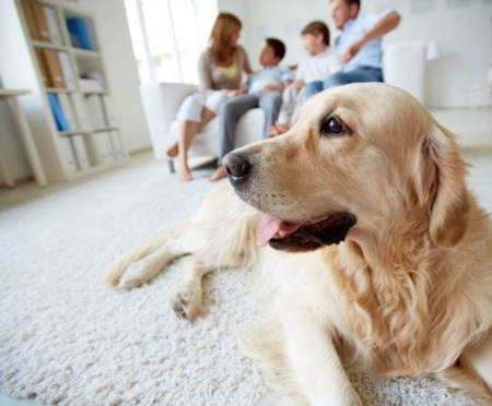 Create an Evacuation Plan for Your Pets