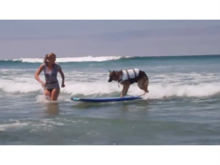 Video: Surf's up Pooches! It's Time For Camp