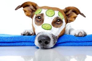 Dog Cancer Treatment – Saving lives at Carlsbad veterinary oncology hospital