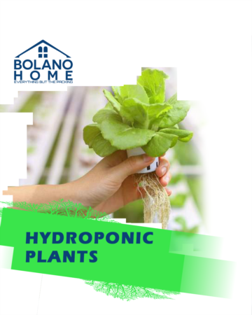 Hydroponic Gardening & How it Works