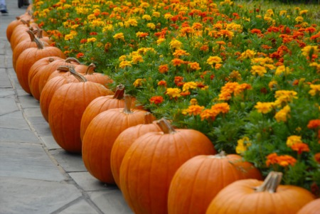 Five Things That Make The Fall A Unique Home Selling Season