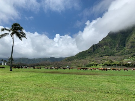 April 2020 Email Update Oahu Real Estate