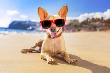 Two Bay Area Cities Make the list of Top 10 Most Dog Friendly Cities in the US