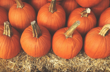 Tampa's Waterfront Pumpkin Patch Coming This Weekend