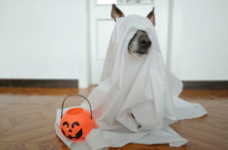 Bring Your Dog And Celebrate Howl-O-Ween At Sparkman Woof