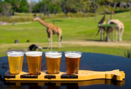 Busch Gardens To Open 'Giraffe' Patio Bar