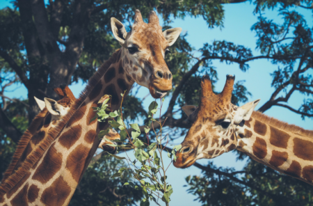 ZooTampa Debuts 'Music In The Wild' Events