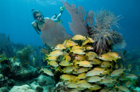 5 Snorkeling Tours In Florida That You Have To Experience This Summer!