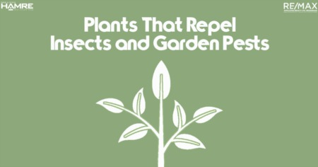 Plants That Repel Insects and Garden Pests