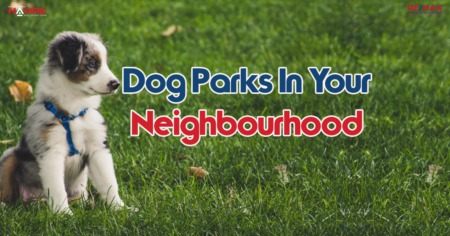 Dog Parks in Your Neighbourhood