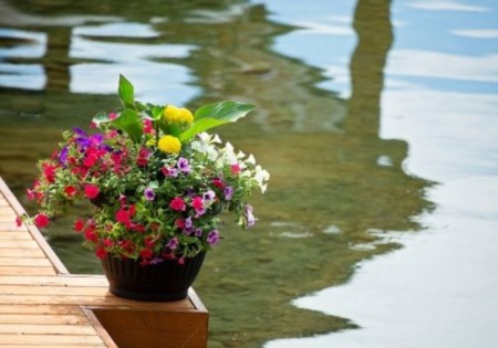 Container Gardening Tips for Lake Docks