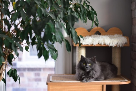 Buyers are Taking Notice of Homes with Pets in Listing Photos