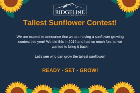 Ridgeline Sunflower Contest!