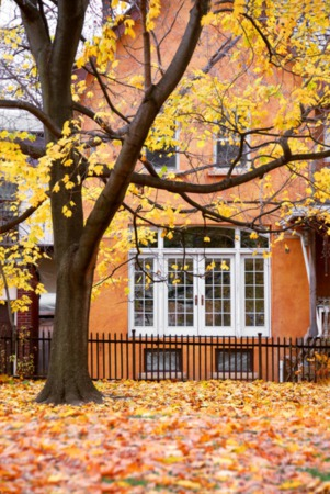 How to Take Care of Your Lawn This Fall