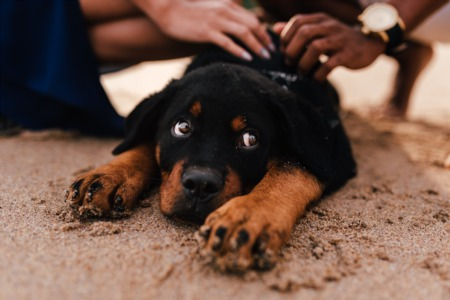 Several Options for Having a Good Time With Your Pets in Rehoboth Beach, Bethany Beach and Surrounding Areas