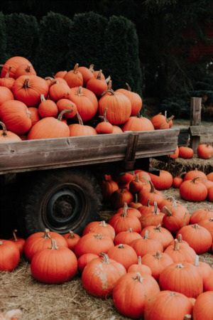 5 Must Attend Fall Events For Your Calendar in Spring Tx