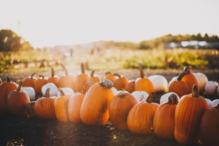 5 Must Attend Fall Events For Your Calendar In Cypress TX