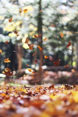 5 Must Attend Fall Events For Your Calendar In Katy TX