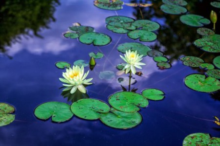 Beauty Flourishes Near Indian River County Homes