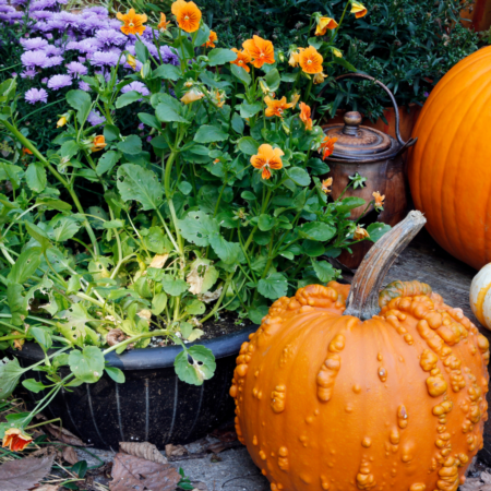 What to Plant This October