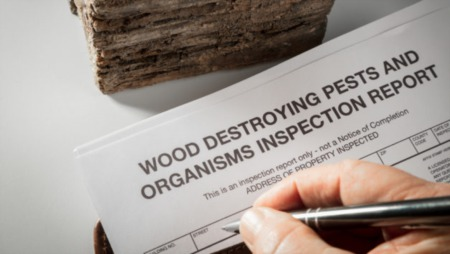 Do You Need Termite Inspection When Buying a Home? 4 Reasons To Call Pest Control