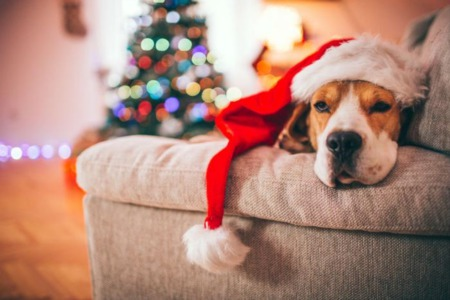 Tips for pet-proofing your home for the holidays