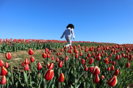 Burnside Farms - Pick Your Own Tulips
