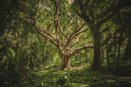 Why You Need to Know a Great Arborist!