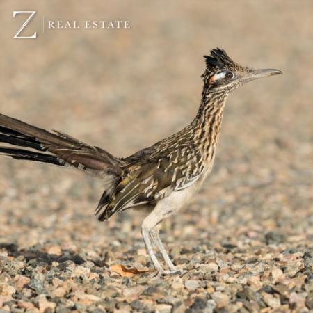 Las Cruces Real Estate | Summer Spotlight - Animals of the Desert Summer Camp