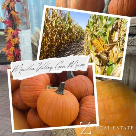 Las Cruces Real Estate | Local Business Shoutout - Mesilla Valley Corn Maze
