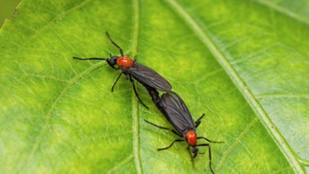 Love Bugs Mean Cooler Weather Is On Its Way - Hurry UP