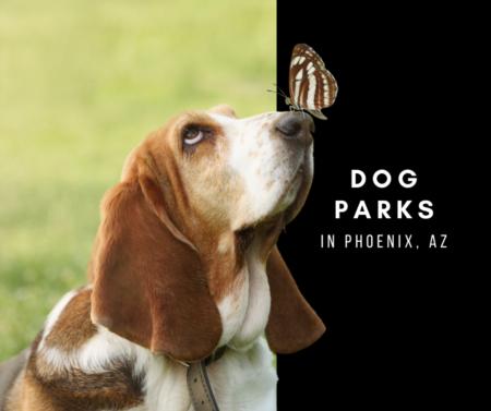 5 Dog Parks in Phoenix, Az.