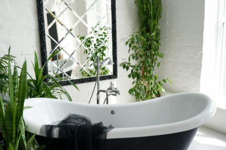Plants That Thrive In The Bathroom