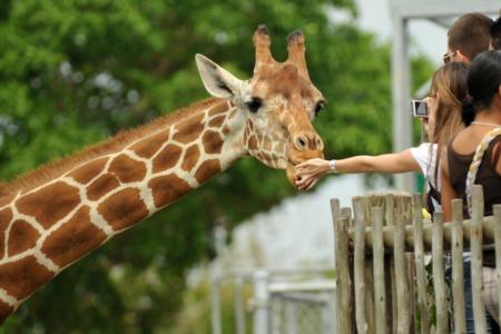 Visiting the Detroit Zoo: Detroit Zoo Spotlight