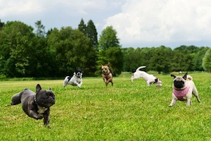 Indianapolis area dog park etiquette and guidelines