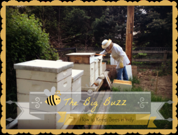 All the Buzz: Beekeeping Basics