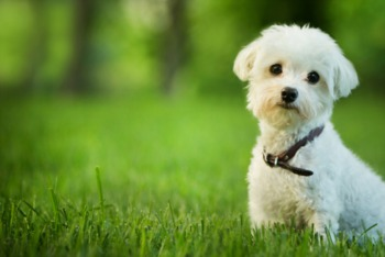 Dog Days: Keeping Your Pooch Active, Cared For, and Groomed