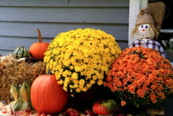 Fall Landscaping Ideas for Your Home